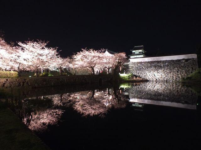 福岡・舞鶴公園の夜桜