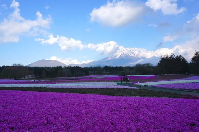 富士芝桜まつり10