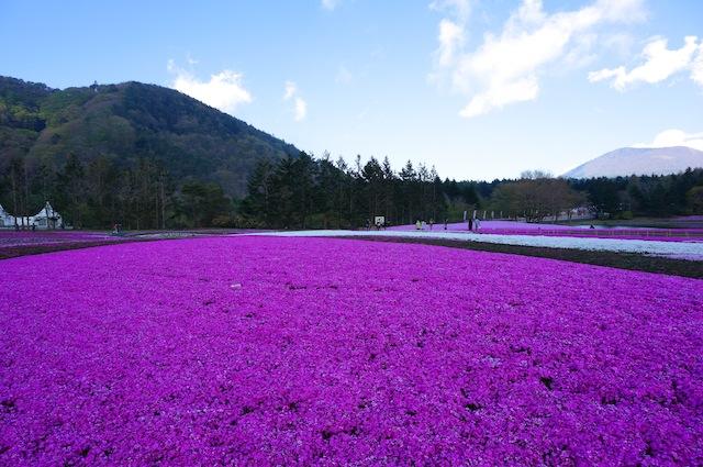 富士芝桜まつり11