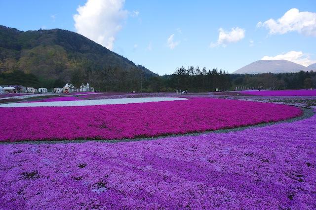 富士芝桜まつり12