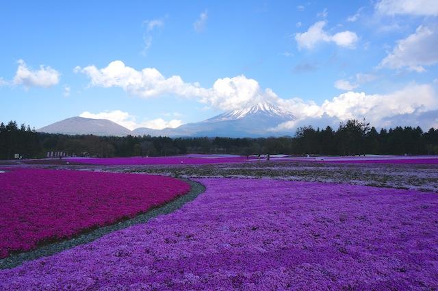 富士芝桜まつり13