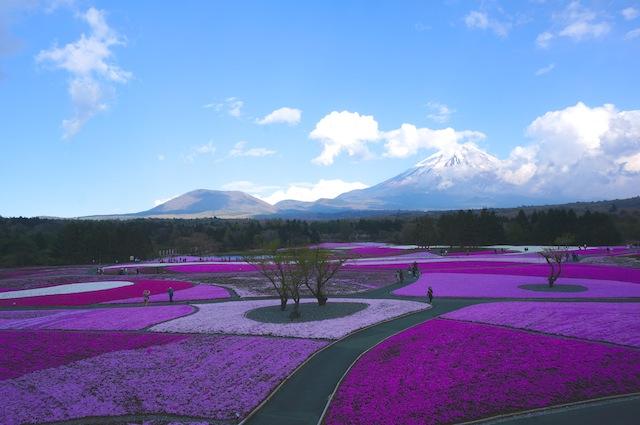 富士芝桜まつり6