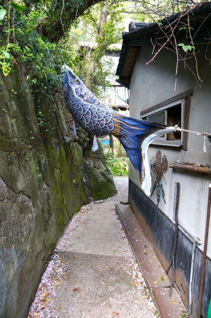 猫の細道と鯉のぼり