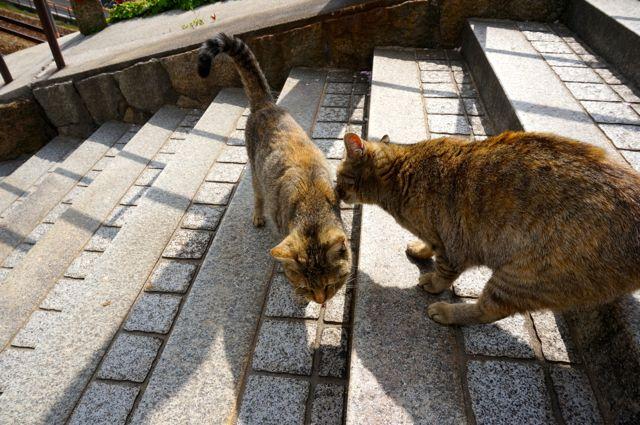 尾道の猫10