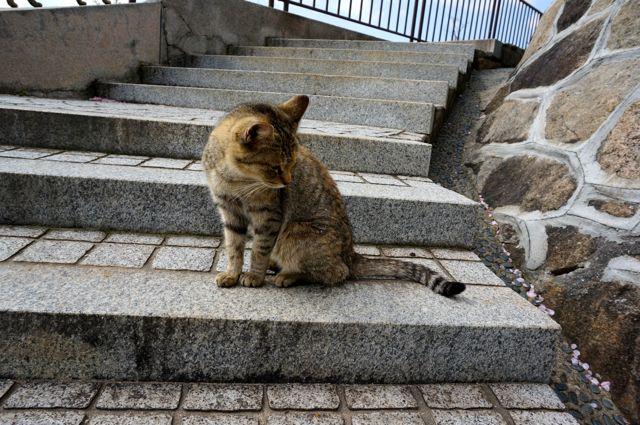 尾道の猫11