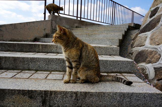 尾道の猫12