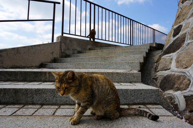 尾道の猫13