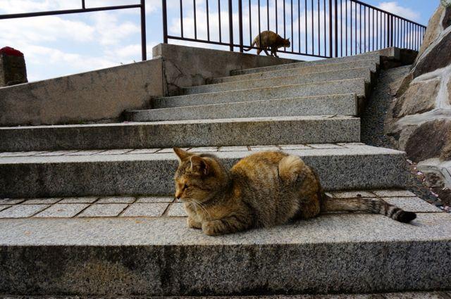 尾道の猫14