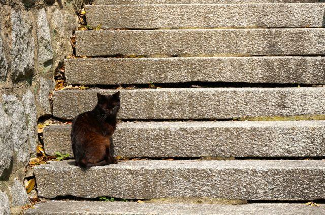 尾道の猫15