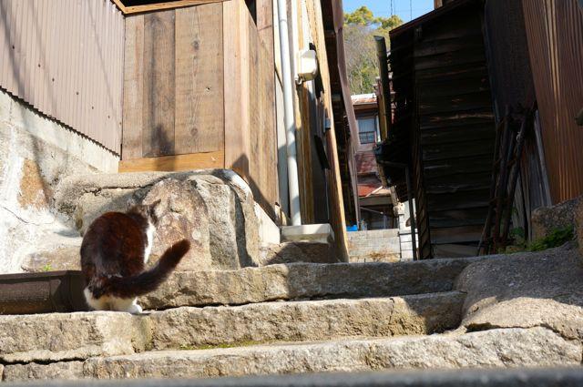尾道の猫3