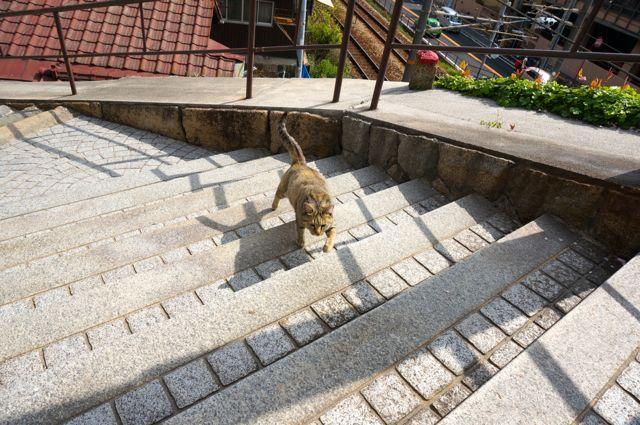 尾道の猫4