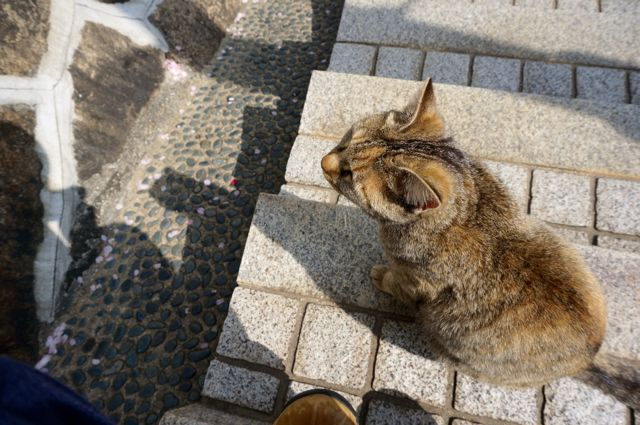 尾道の猫5