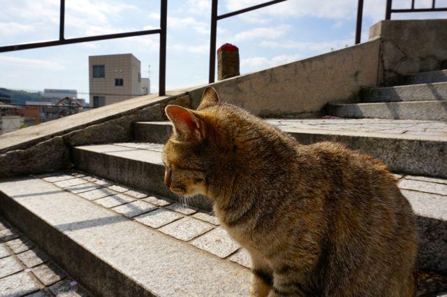 尾道の猫6