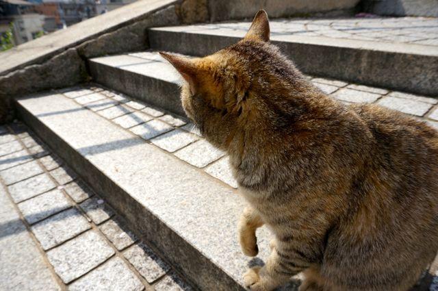 尾道の猫7