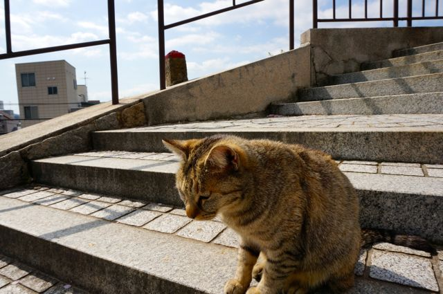 尾道の猫8
