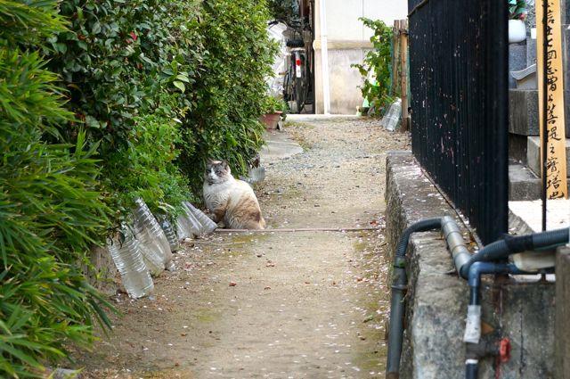 正念寺そばの猫