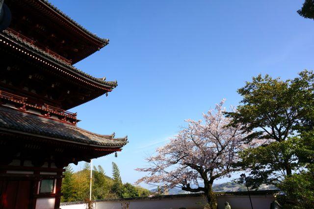 西國寺三重塔と桜