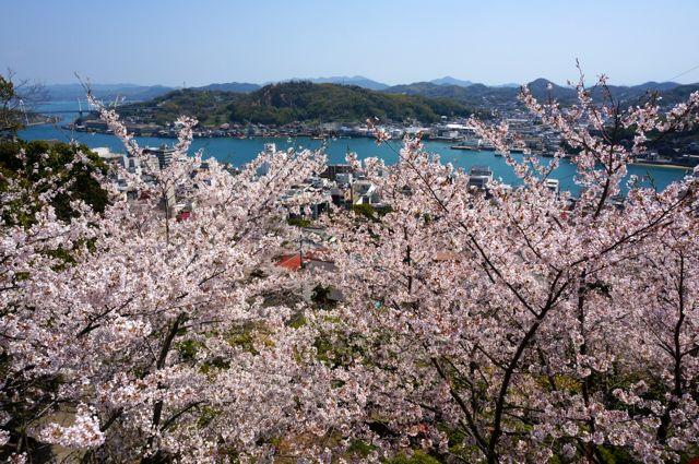 桜と尾道水道