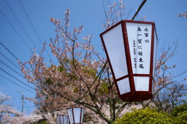 千光寺公園のぼんぼり