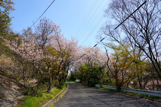 因島公園内道路