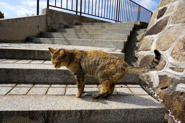 尾道・古寺めぐりルートの猫さん