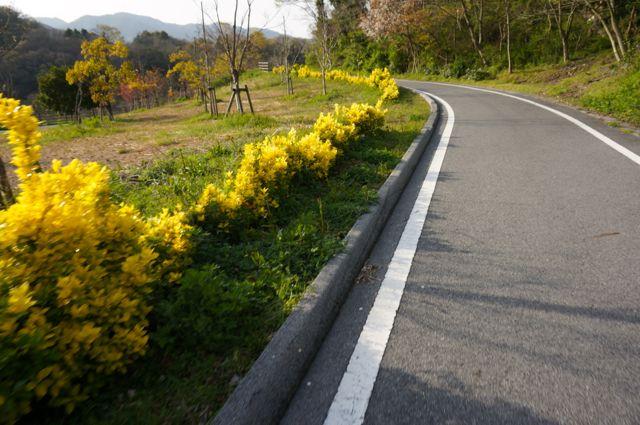 大三島橋への道