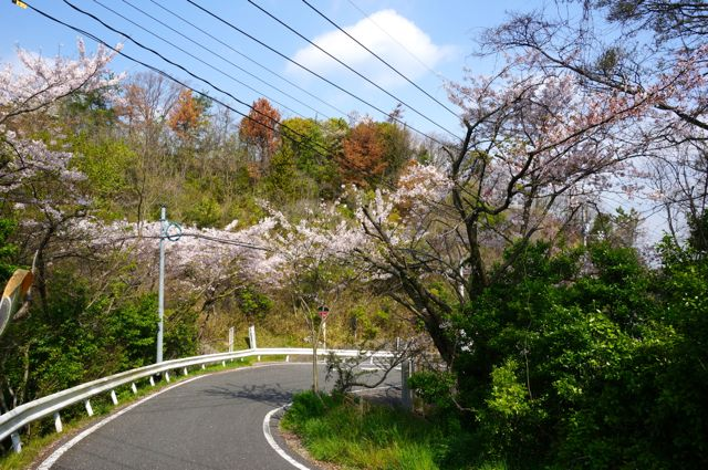 高見山への道1