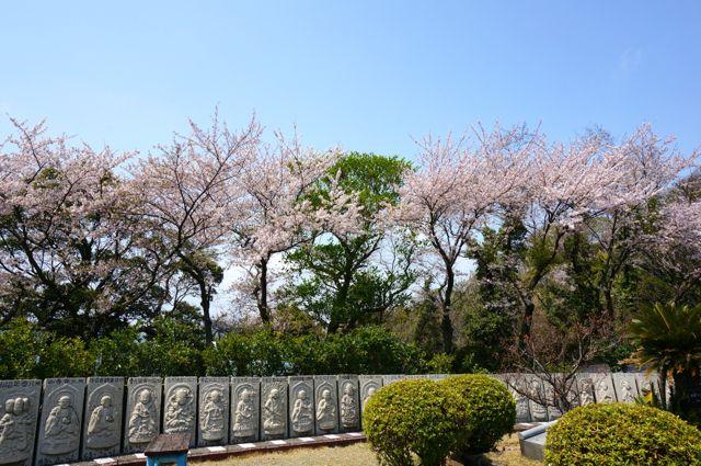 因島・鯖大師の周囲にある仏像と桜
