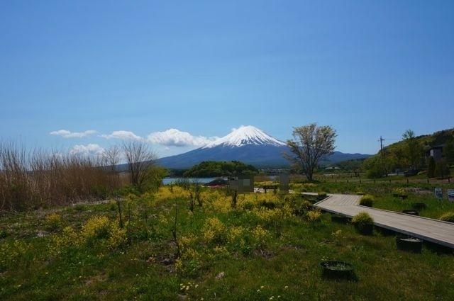 大石公園の花街道から見る富士山1