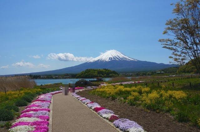 大石公園の花街道から見る富士山2