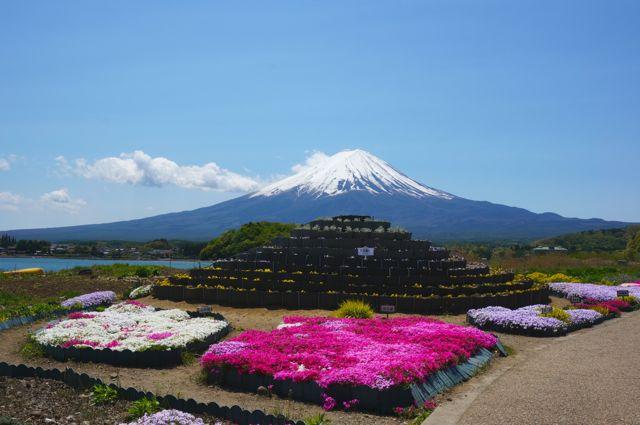 大石公園の花小富士と富士山2