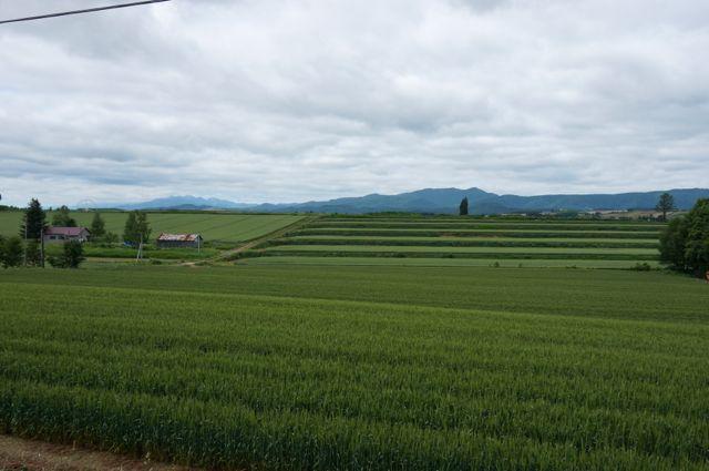 沿道の畑と遠くの山並み