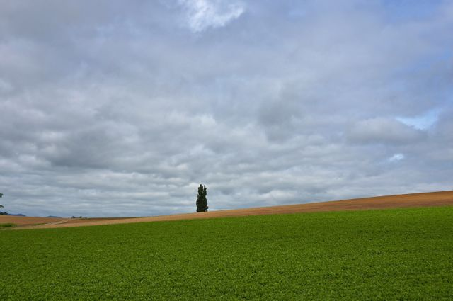 沿道の畑と遠くに見える木