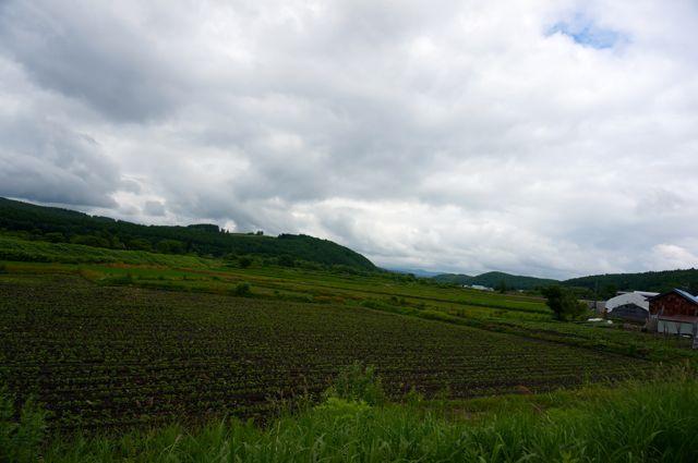 国道237号からの眺め(美瑛)
