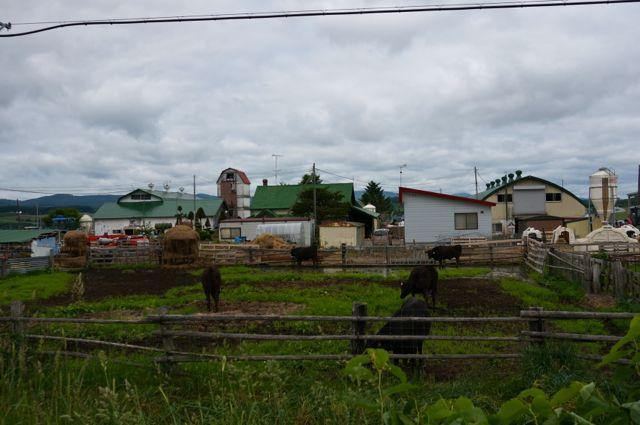 沿道の牧場