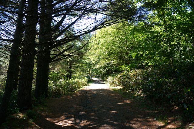 五郎の石の家へ続く道