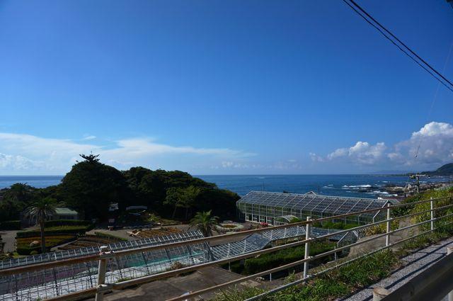 太海フラワー磯釣りセンター
