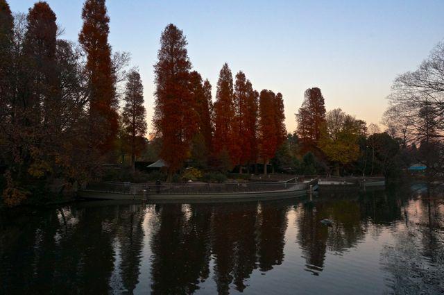 紅葉の井の頭公園