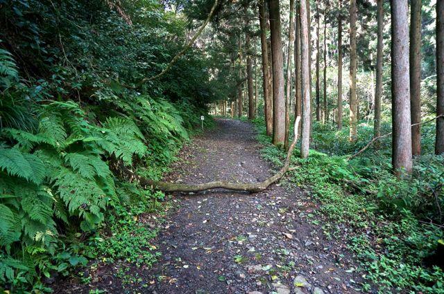 不動の滝への道2