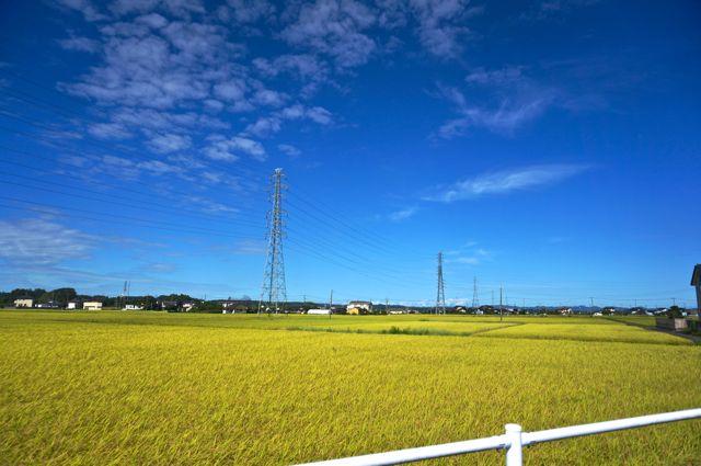 国道118号から見た田んぼ1
