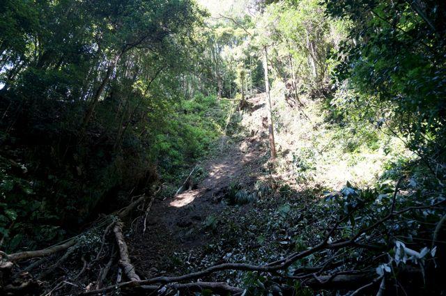 不動の滝横の斜面