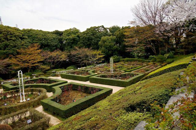 旧古河庭園・バラ園