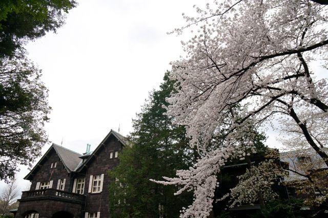 旧古河庭園・ソメイヨシノと洋館1