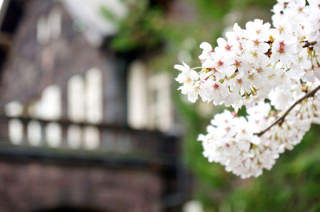 旧古河庭園・ソメイヨシノと洋館2