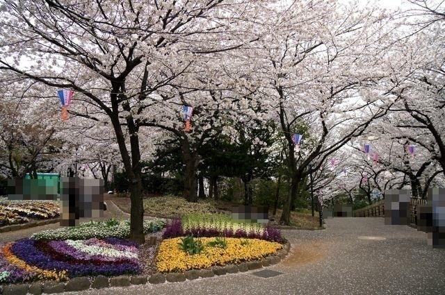 満開のソメイヨシノと花壇の花