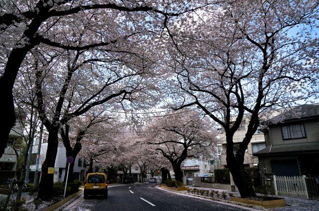 小平市喜平町桜撮り